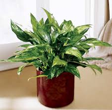 house plants pictures and names darxxidecom
