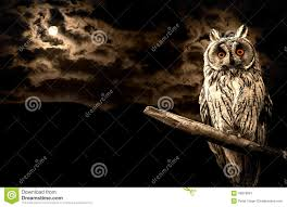 owl halloween background owl and full moon halloween abstract stock photo image 45878067