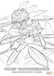 washington state flower coloring page free printable coloring pages