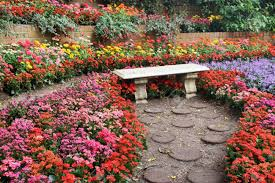 beautiful colourful flower garden stock photo picture and royalty