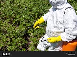 man spraying toxic pesticides image u0026 photo bigstock