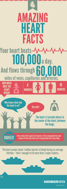 infographic amazing facts