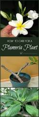 Easy Apartment Plants Best 20 Indoor Tropical Plants Ideas On Pinterest Tropical