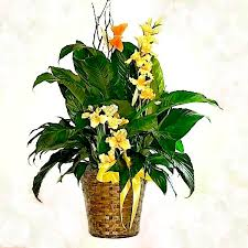 Peace Lily Spathiphyllum Peace Lily With Silk Flowers Waters Edge Floral
