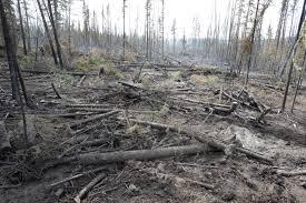 Alaska Wildfire Climate Change by 2016 Alaska Fire Season Numbers Well Below Normal Ak Fire Info