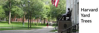 Harvard Campus Map Harvard Yard Tree Website