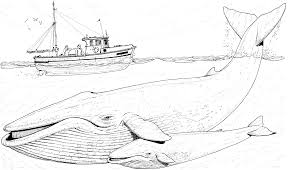 Blue Whale Coloring Pages printable baby whale image free whale coloring pages blue whales