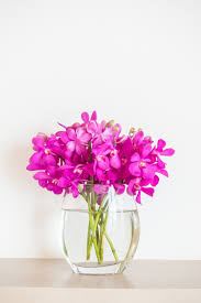 Flowers In A Vase Images Orchid Flower In Vase Photo Free Download