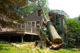 what to do when a tree falls on your house keith laskey pulse