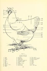 frost on chickens the plymouth rock standard and breed book