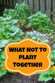 Beginner Vegetable Garden Layout by Best 25 When To Plant Vegetables Ideas On Pinterest When To