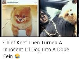 Chief Keef Meme - chief keef then turned a innocent lil dog into a dope fein