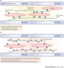 mechanism of action of caplacizumab thrombotic microangiopathy