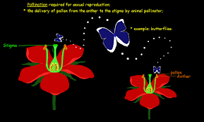 Reproduction In Flowering Plants - reproduction in plants