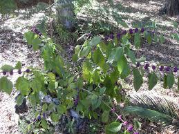 common backyard plants mehmetcetinsozler com