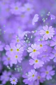 3855 best purple images on pinterest purple stuff lavender and