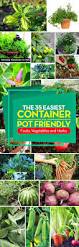 best 25 unique garden ideas only on pinterest potes suculentos the 35 easiest container and pot friendly fruits vegetables and herbs diy container flowersgarden design ideasgarden