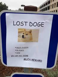 Doge Meme Original Picture - lost doge meme original