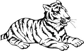 Tiger Coloring Picture Printable Tiger Coloring Pages Tiger Coloring Pages Tiger