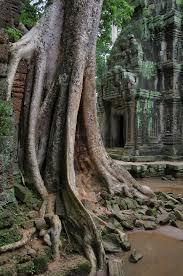 file ta prohm angkor ruins and trees jpg wikimedia commons