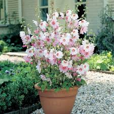 Plants For Patio by Paintings Of Fall Flower Gardens You Can Get Additional Details