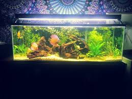 Asian Themed Fish Tank Decorations 3 Ways To Creatively Decorate A Freshwater Fish Tank Wikihow