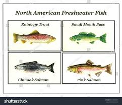 Freshwater Fish North American Freshwater Fish Stock Illustration 143469595
