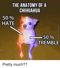 Memes De Chihuahua - 25 best memes about chihuahua chihuahua memes