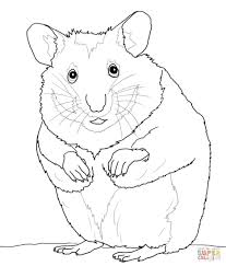 interesting hamster coloring pages loving printable cute hamster