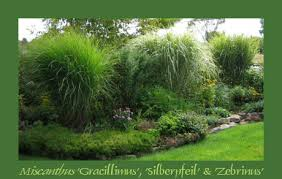 ornamental grasses their companions 2