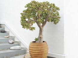 best house plants best healthy indoor house plants mindful yoga health