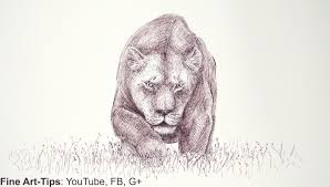 how to draw draw a lioness with a marker mountain lion cougar