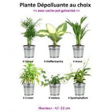 plantes d駱olluantes chambre plantes dépolluantes plantes d intérieur boutique en ligne