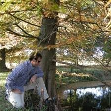 buy pond cypress trees at best price plants