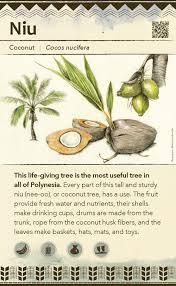 fruit tree garden layout canoe plants u2014 botanical artist u0026 illustrator learn to draw art