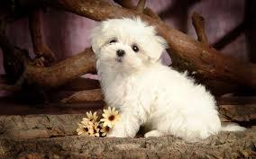 Dog Wallpapers Cute Puppies And Dogs Wallpaper Wallpapersafari