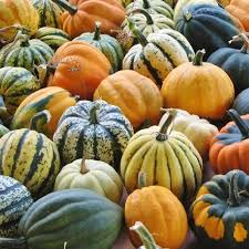 Honeynut Squash Seeds Buy Seeds By The Packet Or In Bulk At