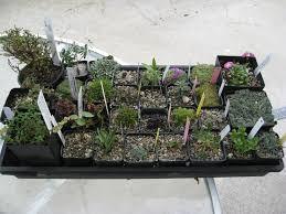 ordinary garden plants for winter part 2 ordinary garden plants