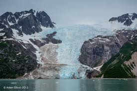 kendall lexus anchorage alaska alaskan wildlife archives i love alaska