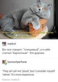 Cat Pics Meme - these russian cat memes are a dose of good internet motherboard