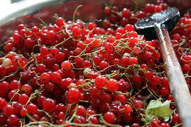 red currant jam david lebovitz