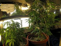 10 tips tricks u0026 tactics for great plant pictures grow weed easy