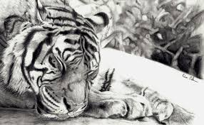 tiger sketch by lisalaughsalot on deviantart