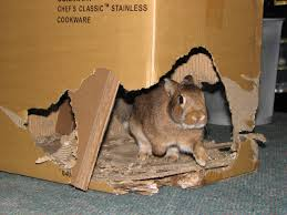 cardboard castle for your pet rabbit idolza