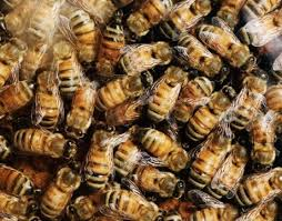 Seeking Honey Insects Personalities Research On Novelty Seeking