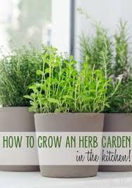 modern white minimalist easy windowsill herb garden planters
