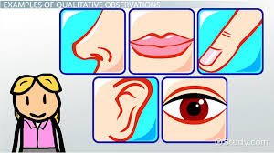 what is qualitative observation definition exle