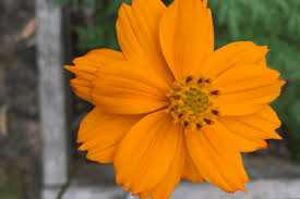 Gardening Zone By Zip Code - 10 best gardening subscription boxes for urban gardeners urban