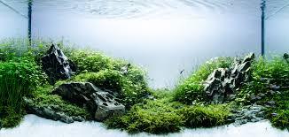 Aquascape Static 800nbk8o0z8co0cgo4s8ws4sw Jpg