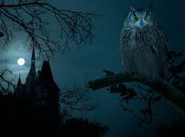 halloween night owl hounted house dark moon halloween night castle